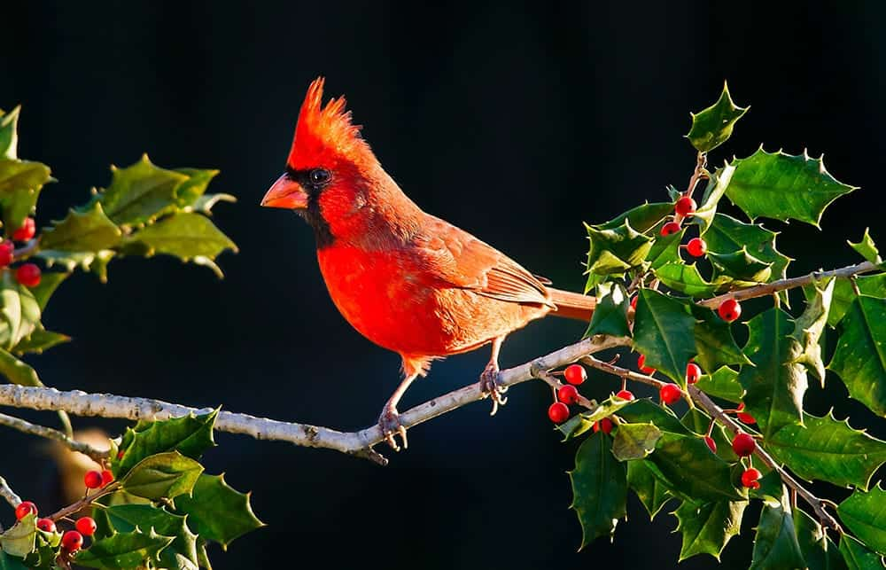 Cardinal - Sincerity and Truthfulness