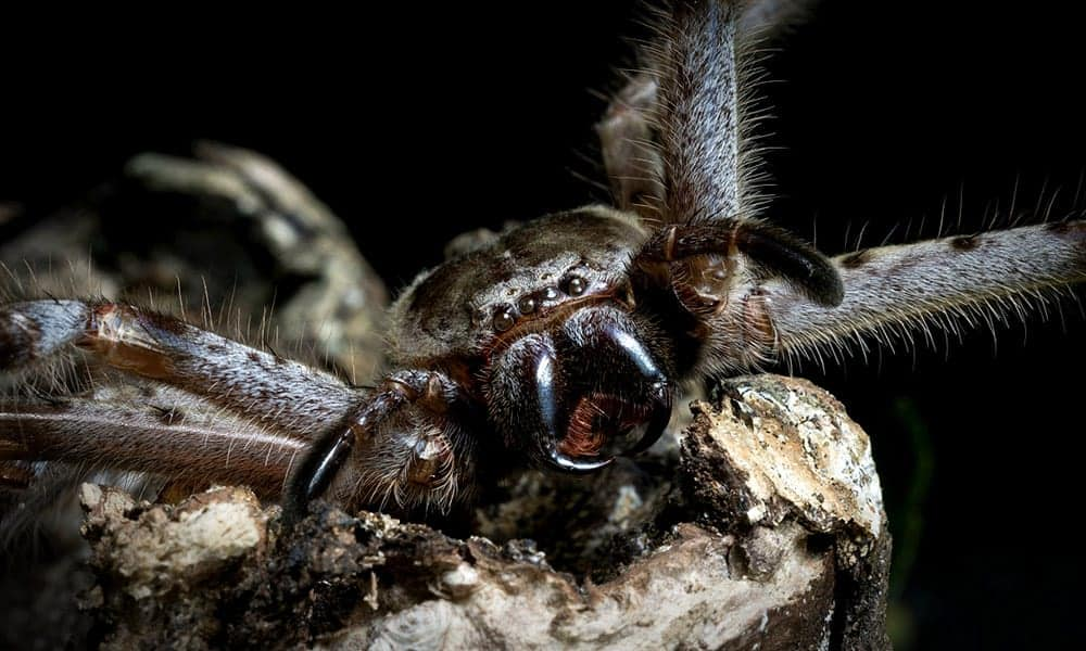 scary big spider picture
