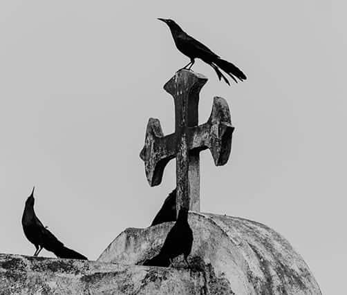 Symbolic Animal Meanings & Photoblog