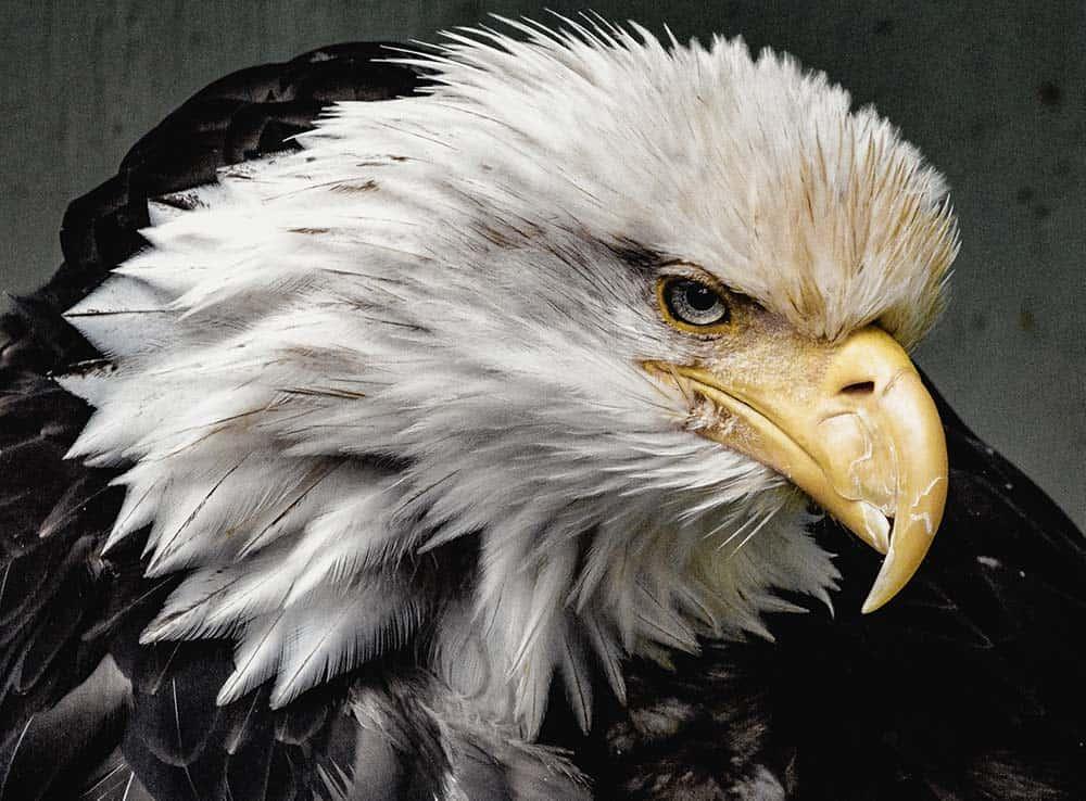 What do Native American Birds symbolize