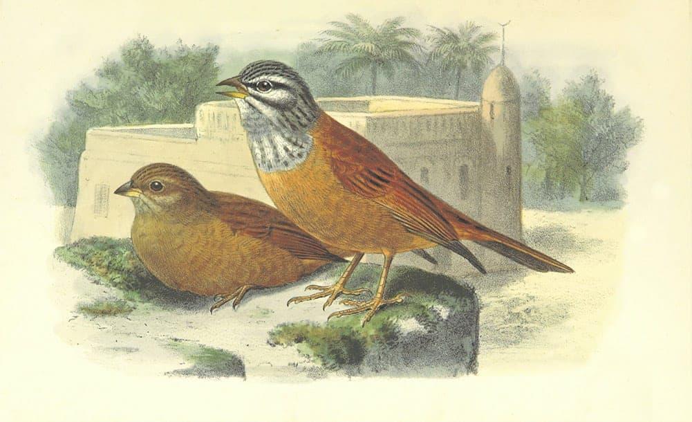 Bird Symbolism in Art
