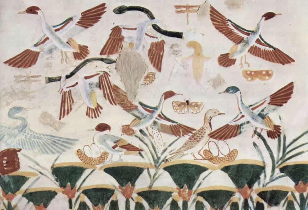 Bird Symbolism in Different Cultures
