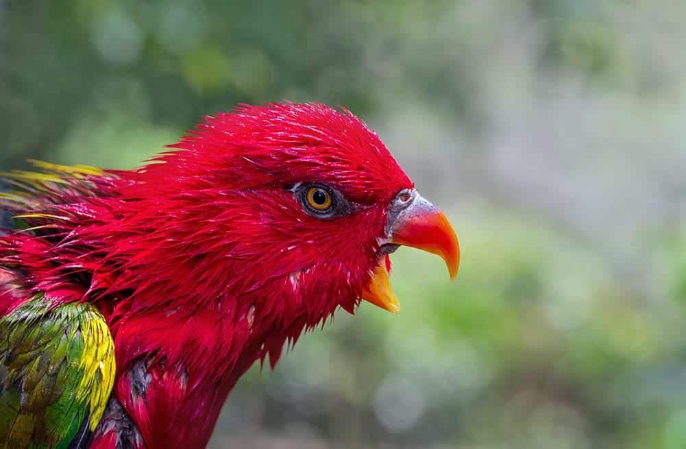 symbolism-red-bird