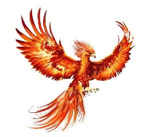 Birds That Mean Life - Phoenix