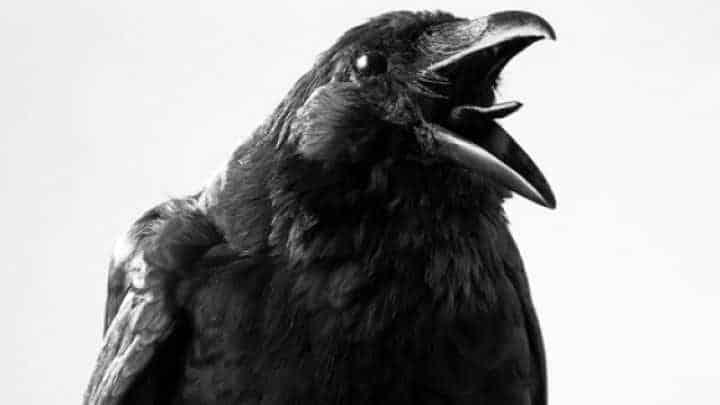 Ravens symbolism