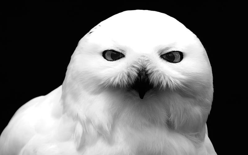 Owls symbolism