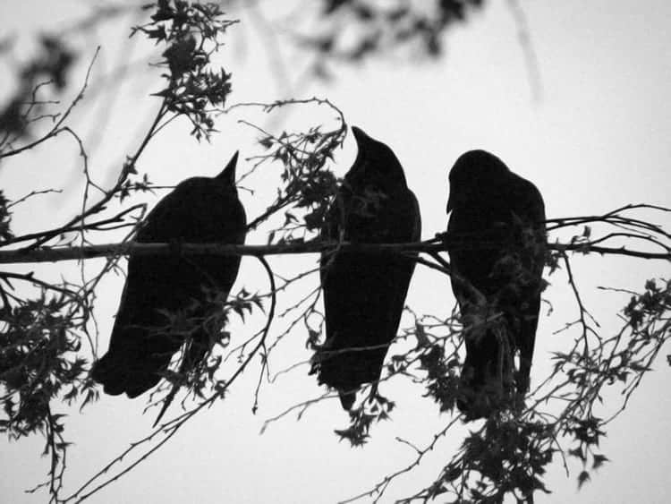 3 Crows meaning