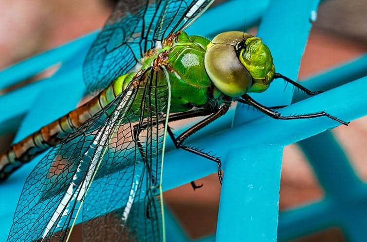 Meaning of a Dragonfly Sighting