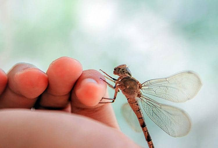 Meaning of a dragonfly landing on you