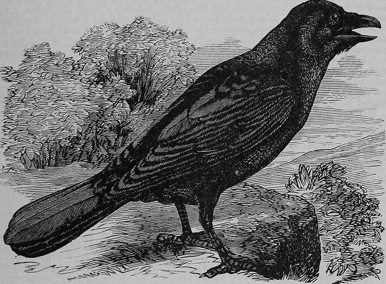 Symbolism of Crows in Christianity