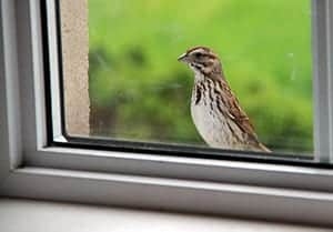 bird is tapping at your window