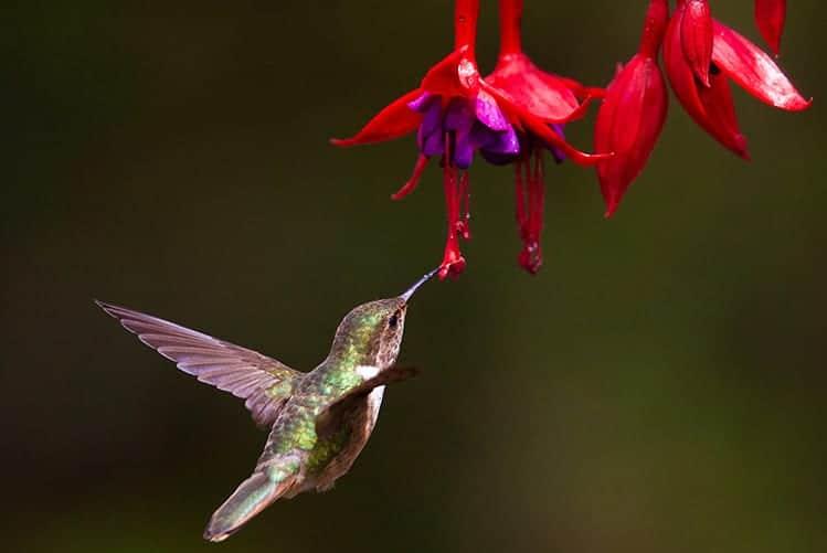 Biblical meaning of a Hummingbird