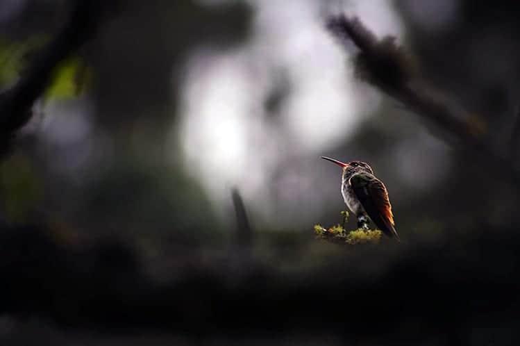 Hummingbird symbolism death