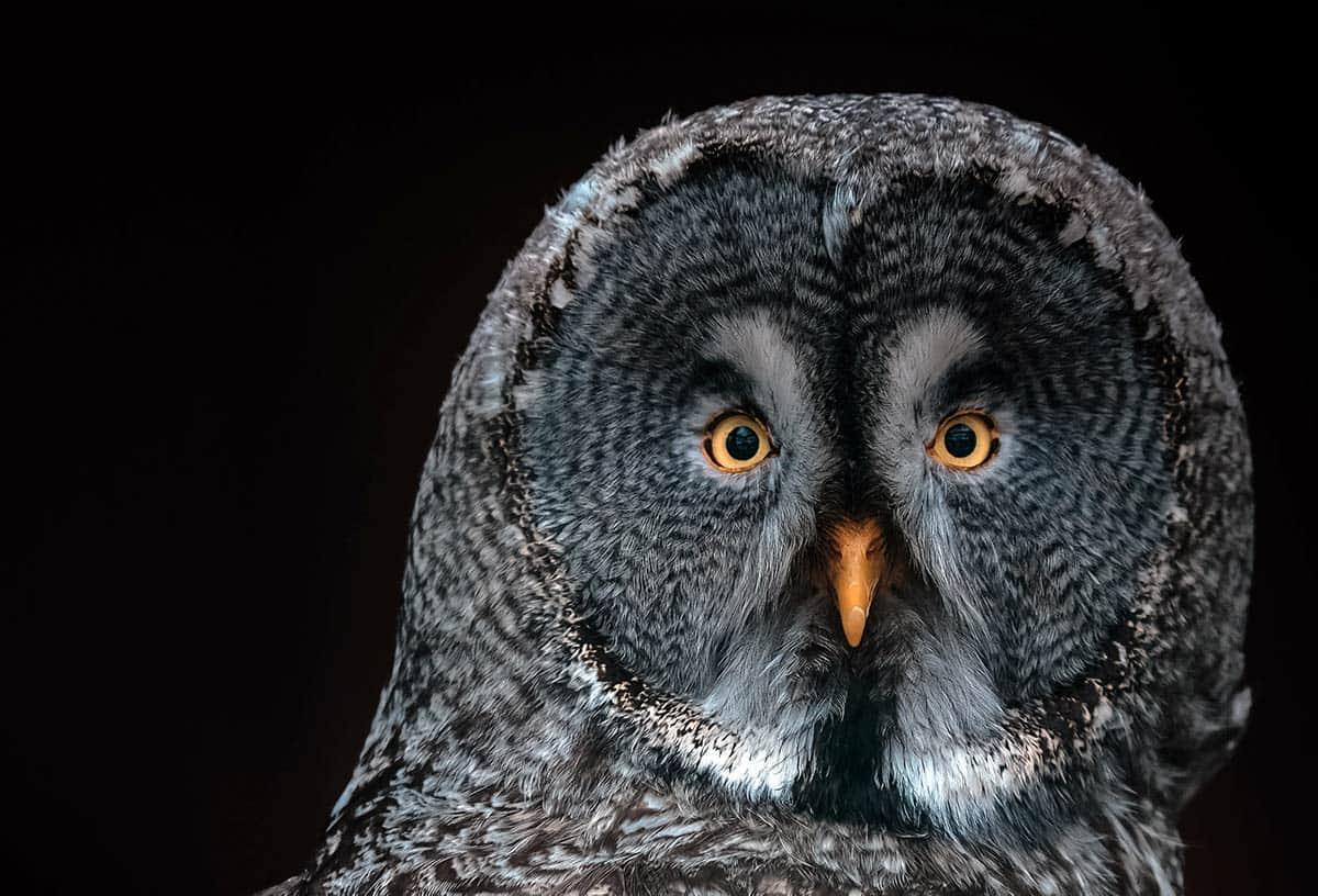 Owl spiritual meaning