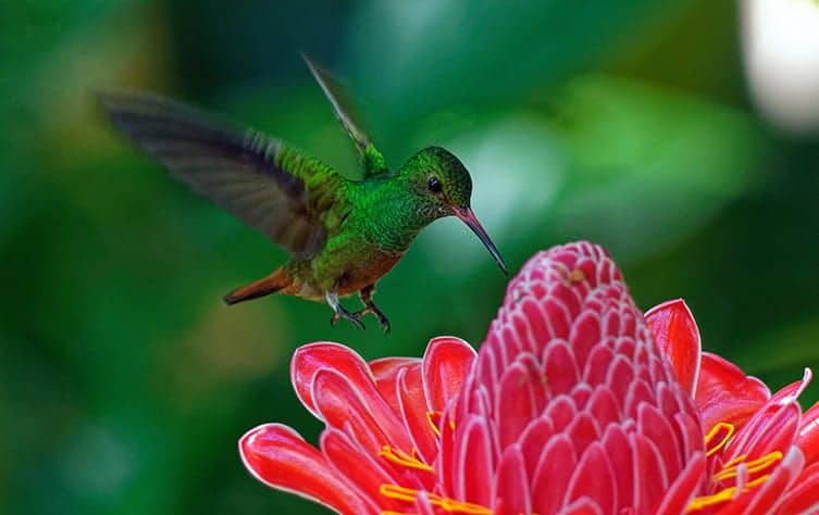 seeing a hummingbird meaning