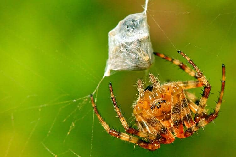 Meaning of spiders crawling on you