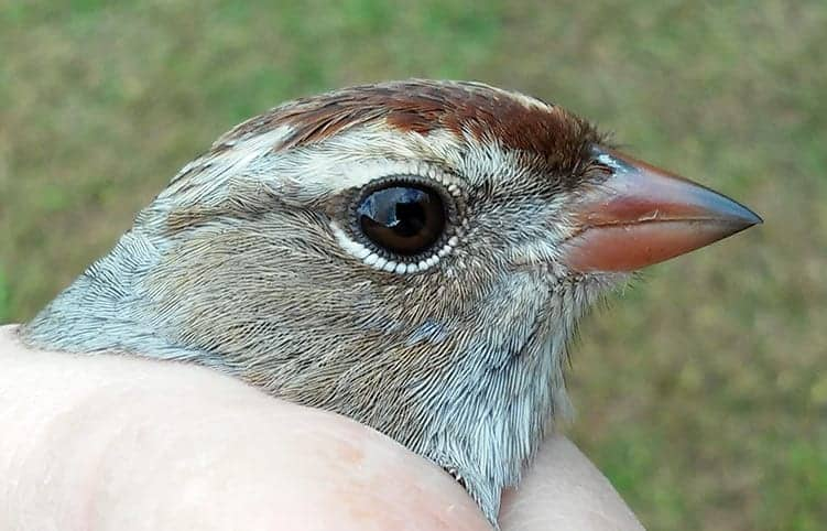 What is 'his eye in the sparrow'?