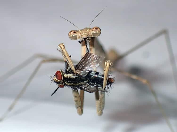 Praying Mantis: Meaning When You See One