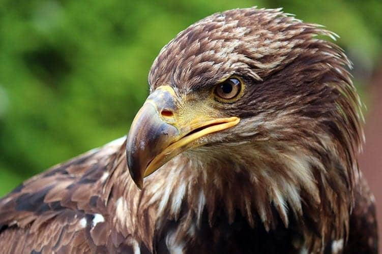 Eagle feather meaning
