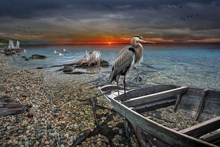Heron in Dreams Meaning