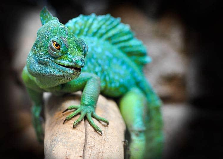 Lizard Spirit Animal