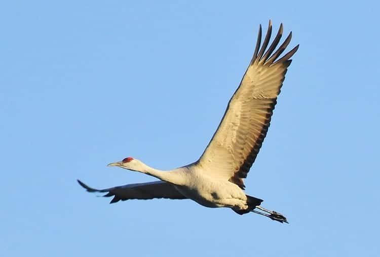 What Do Cranes Symbolize