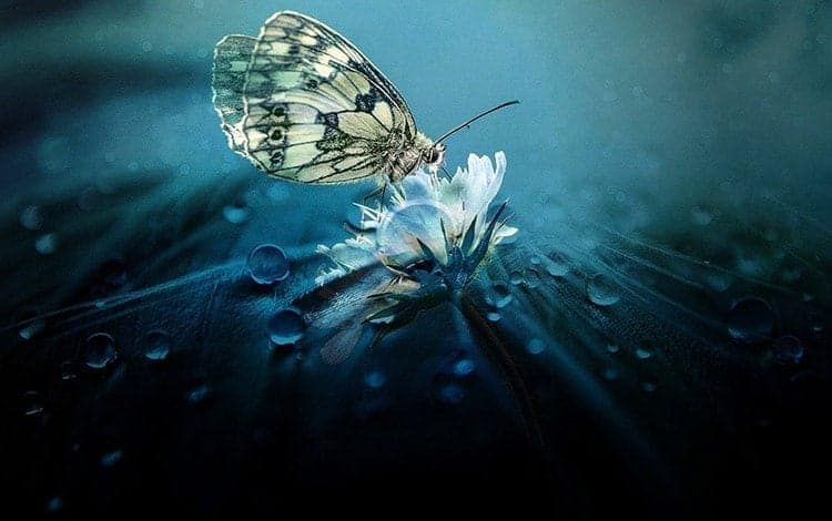What Does It Mean When a Butterfly Follows You